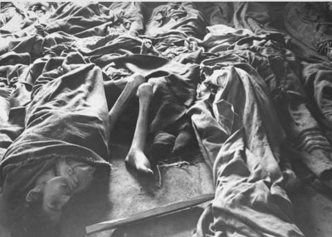 Concentration Camp Essay