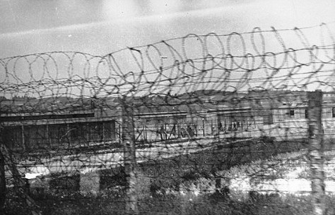 barbed wire fence carriage